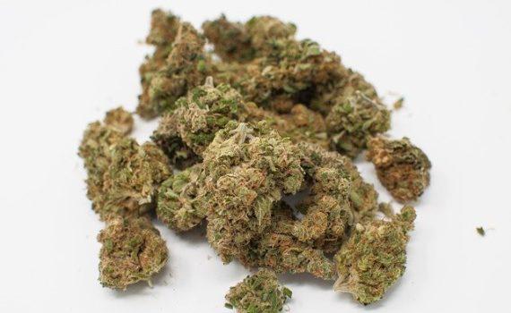 5 Cannabis Strains For Chronic Pain