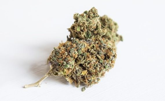 Clean Green the only way to certificate in the US your cannabis is organic