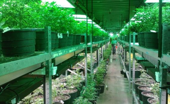 trends in the cannabis industry