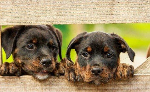 Calm your pet with CBD