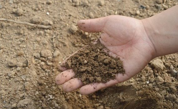 The perfect soil to grow cannabis