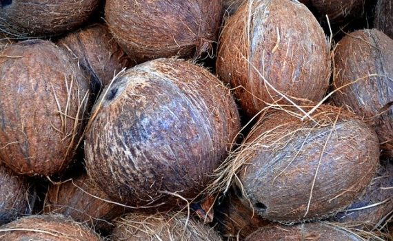 Coconut fiber to grow cannabis