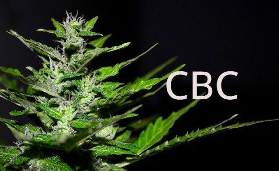CBC (cannabichromene)