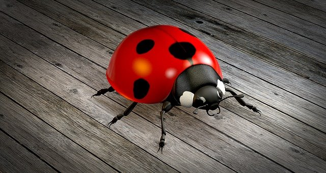Insects to fight pests in cannabis ladybug