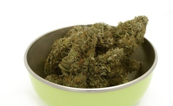 WHO (World Health Organization) recommends removing cannabis from the list of harmful substances
