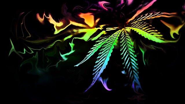 International Church of Cannabis-Iglesia Internacional del Cannabis