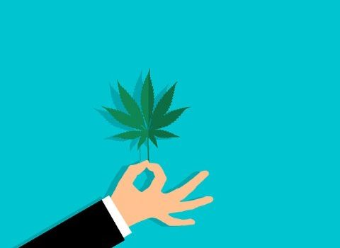 Too many investors in the cannabis industry are waiting for the illegal marijuana market to disappear, but it seems that this will not happen at the moment