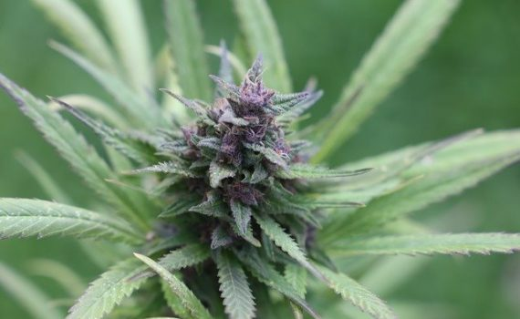 Growing weed with hardly any budget