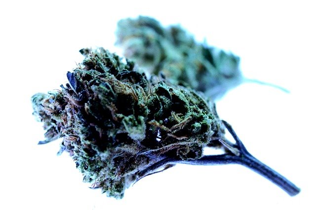 New study confirms the analgesic effect of cannabis flower