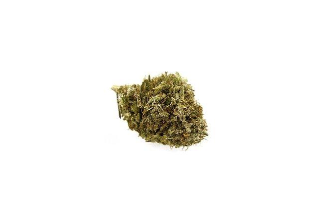 El Departamento de Justicia de EE:UU necesita más productores de cannabis