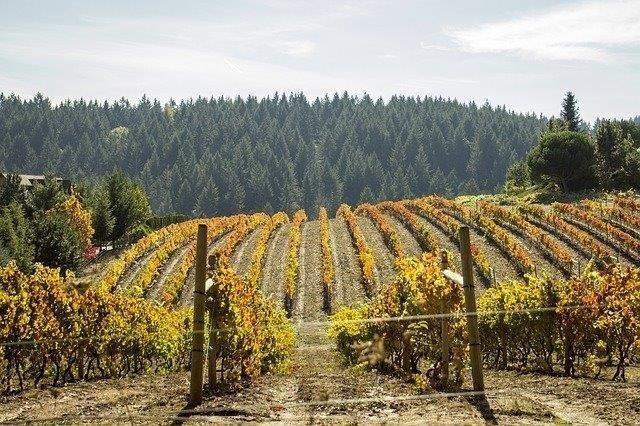 War between wine growers and marijuana growers in California