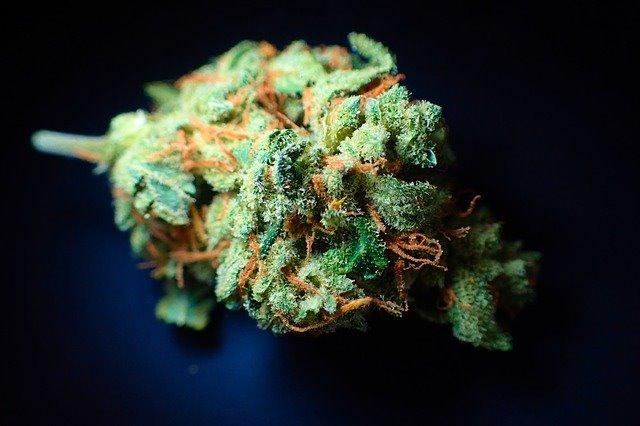 Odorless Marijuana
